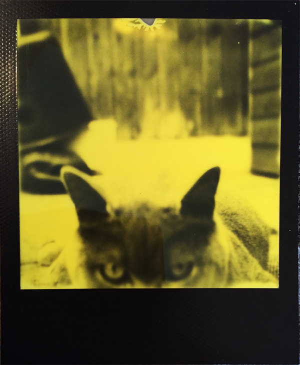 LIGHTLEAKS yellow 1 Black & Yellow Film by Third Man Records Edition  Image of yellow 1