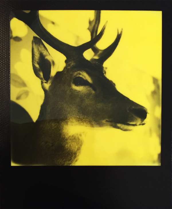 LIGHTLEAKS yellow 2 Black & Yellow Film by Third Man Records Edition  Image of yellow 2