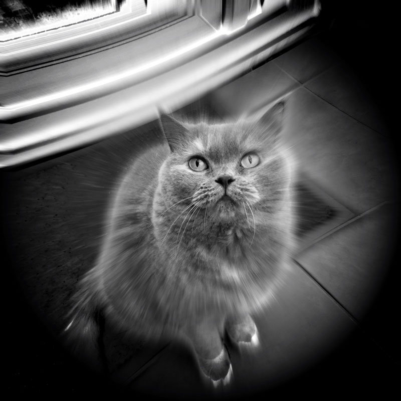 The Hipstamatic Cat